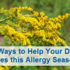 Thumbnail image for 4 Ways To Help Your Dry Eyes This Allergy Season