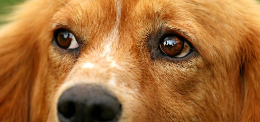 Close-up of dog's eyes