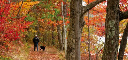 Walking dog in a forest during Fall